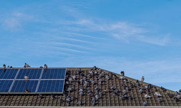 Common photovoltaic panel failures